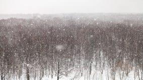 Panoramautsikt av tungt snöfall över trän arkivfoto