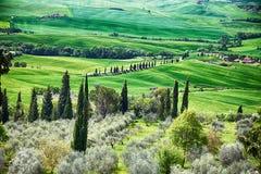 Panoramautsikt av typisk tuscany bygd med cypressen och ängen, Siena landskap, Italien royaltyfri fotografi