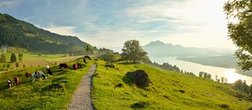 Panoramautsikt på den härliga sjön Lucerne i Schweiz royaltyfri bild