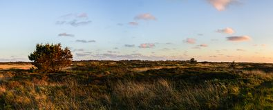 Panoramautsikt på ett dynlandskap i vildmarken med en vanlig väg till horisonten längs solnedgången i Danmark på ön Romo arkivbild