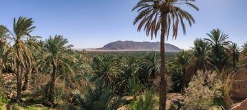 Panoramautsikten över oas av datumet gömma i handflatan, Figuig, Marocko Arkivfoton