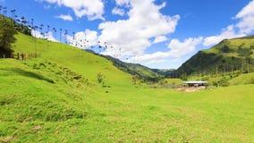 Panoramautsikten av den Cocora dalen och dess vax gömma i handflatan stock video