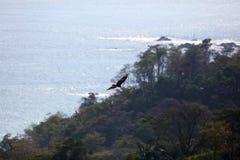 Panoramautsikten av den Manuel Antonio nationalparkstranden i Costa Rica, mest härlig stränder i världen, surfare sätter på land  arkivfoton