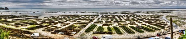 Panoramautsikten av ostron brukar i Cancal, Frankrike royaltyfri foto