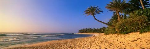 Panoramautsikten av palmträd och den norr kusten sätter på land, Oahu, Hawaii Arkivfoto