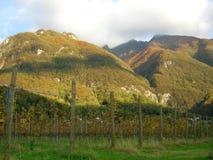 panoramavingårdwine Royaltyfri Foto