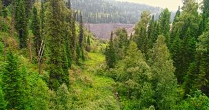 Panoramavogelperspektive auf Waldvogelperspektive auf der Landstra?e in der Waldansicht vom Brummen bei Taiga Antenne des Fliegen stock video footage