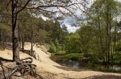 Panoramawaldfluß Stockbild