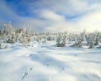 Panoramawinterlandschaft mit Wald und Spuren eines Hasen auf s Lizenzfreie Stockfotografie