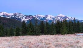 Panorami con le alte montagne, le cime di cui sono coperte di neve, le foreste, un prato inglese con un'erba secca Fotografia Stock Libera da Diritti