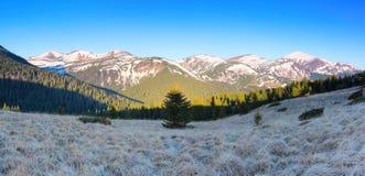 Panorami con le alte montagne, le cime di cui sono coperte di neve, le foreste, un prato inglese con un'erba secca Immagini Stock