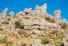 Panoramic aerial top view of mountains stones of El Torcal natural park,a lot of trees and wild goats greezing near the path on s. Unny winter day, Malaga royalty free stock photography