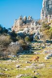 Panoramic aerial top view of mountains stones of El Torcal natural park,a lot of trees and wild goat greezing near the path on. Sunny winter day, Malaga stock photo