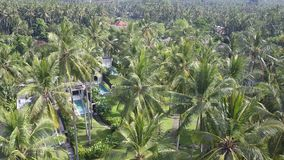 Panoramic aerial view from drone of a palm tree the sea and the pool on tropical the resort of Bali Indonesia. Panoramic view of a palm tree the sea and the pool stock video