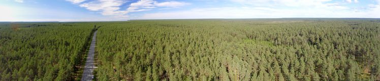 Panoramic aerial view of Road across the Forest.  Royalty Free Stock Photo