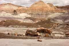The petrified forest as seen in arizona in the springtim royalty free stock photos
