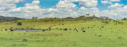 Panoramic Australian Rural Landscape Stock Images