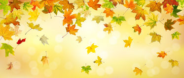 Panoramic autumn background Royalty Free Stock Images