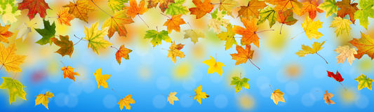 Panoramic autumn background Royalty Free Stock Photo