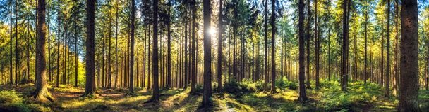 Free Panoramic Autumn Forest Landscape Stock Image - 132751591