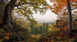 Panoramic Autumn Forest Landscape With View Of Mountain Misty Valley And Colorful Autumn Forest. Enchanted Autumn Foggy Forest Wi Stock Photo