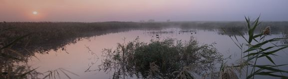 Panorama of a colorful purple dawn over the lake, overgrown with reeds. royalty free stock photos