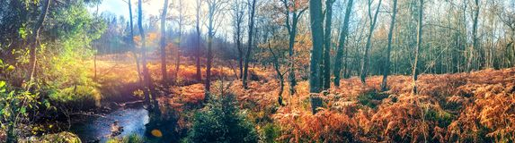 Panoramic autumn landscape with forest stream royalty free stock photo