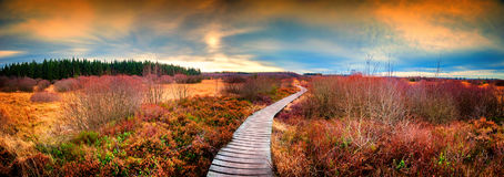 Panoramic autumn landscape with wooden path. Fall nature backgro