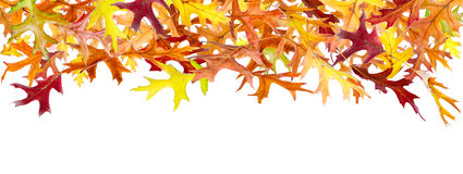Panoramic Autumn Leaves Stock Photography