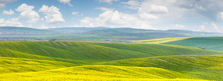 Panoramic background of beautiful yellow-green floral canola fie Royalty Free Stock Image