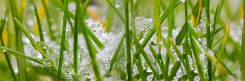 Grass panorama with snow Royalty Free Stock Image