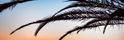 Panoramic background with palm tree branch Royalty Free Stock Image
