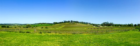Panoramic Barossa royalty free stock photography