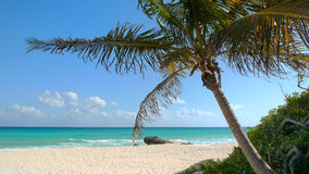 Panoramic beach with palm tree Stock Image
