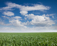 Panoramic beautiful landscape grass and cloud Stock Photos
