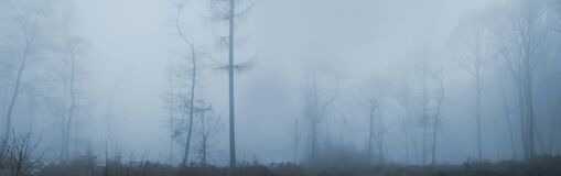 Panoramic blurred blue landscape of the forest in the fog, bare tree trunks, concept horor, magic photo wallpaper