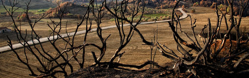 Panoramic burned Landscape. Panoramic view of a burned field and a road crossing it Stock Photo