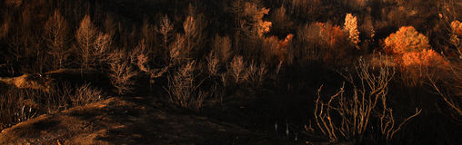 Panoramic burned Landscape. Panoramic view of a hill with burned trees Royalty Free Stock Images
