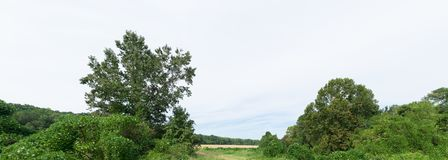 Rural North Mississippi Agricultural Landscape. A panoramic capture of a rural landscape with kudzu vines taking over some small trees in the foreground royalty free stock photography