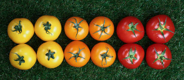 Panoramic composition of red yellow and orange tomatoes Royalty Free Stock Images