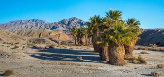 Seventeen Palms Royalty Free Stock Images