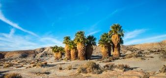 Seventeen Palms Stock Photos