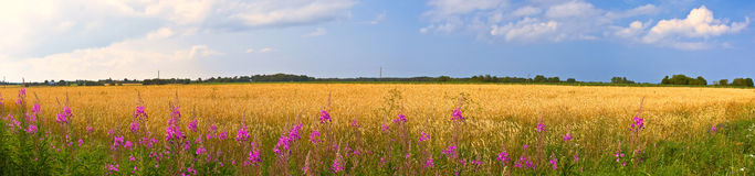 Panoramic countryside wide view with trees behind. Royalty Free Stock Photos