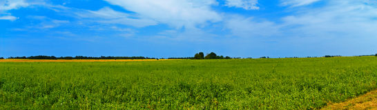 Panoramic countryside wide view with trees behind. Rural summer Royalty Free Stock Photo