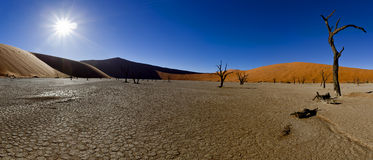 Panoramic desert landscape Stock Photos