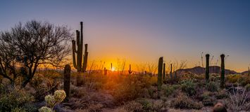 Panoramic of desert sunset. Sunset in the Saguara National Park in Arizona Royalty Free Stock Photo