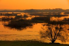 Early morning view of wetlands and meadows of the Biebrzanski National Park in Poland Stock Photo