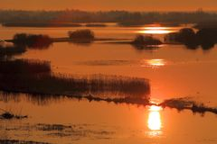 Early morning view of wetlands and meadows of the Biebrzanski National Park in Poland Stock Images