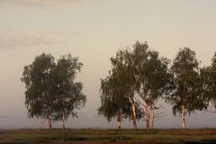 Panoramic early morning view of wetlands and meadows under dawn fog by the Biebrza river in Poland Stock Images