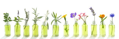 Panoramic essential oil flowers cornflower, eucalyptus, tarragon, geranium, geranium, lavender, mint, carnation turkey, oregano,. Panoramic essential oil flowers royalty free stock image